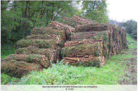 Biomasa uso energético COSE.JPG