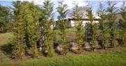 b3. plantación de árboles